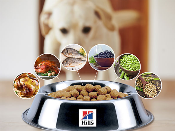 Hill's pet food contains a variety of flavors, many of which are depicted here.