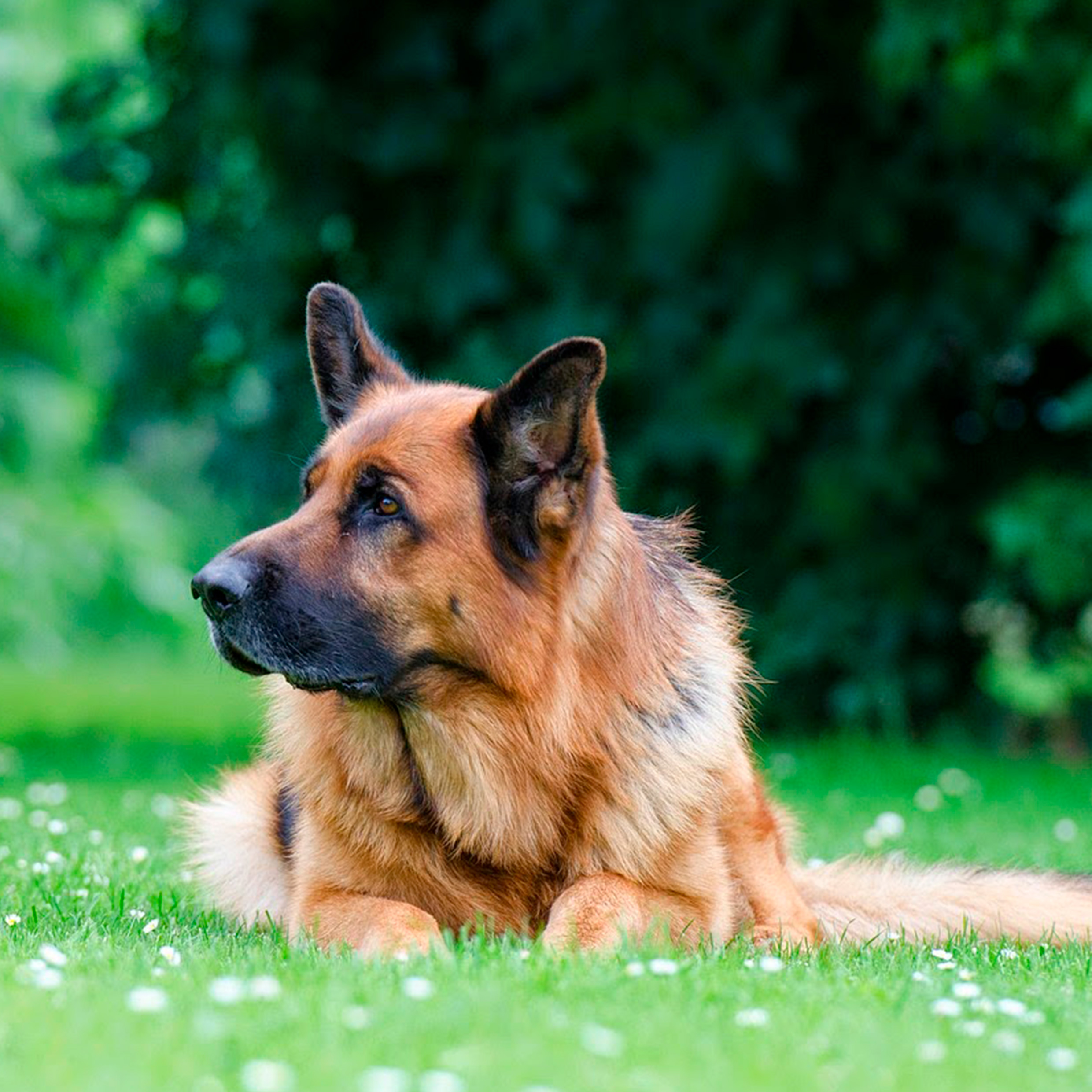 8 Common health problems in senior dogs